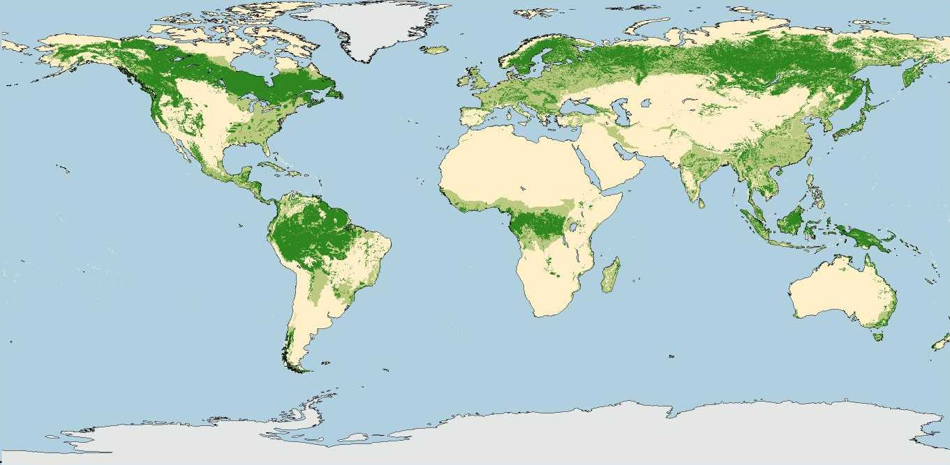 coniferous forest maps of the tropical with 490 on World Forestry Distribution furthermore China World Map besides How To Draw Forests as well World Biomes Pin Map Rainforest Desert Savanna Tundra further 490.