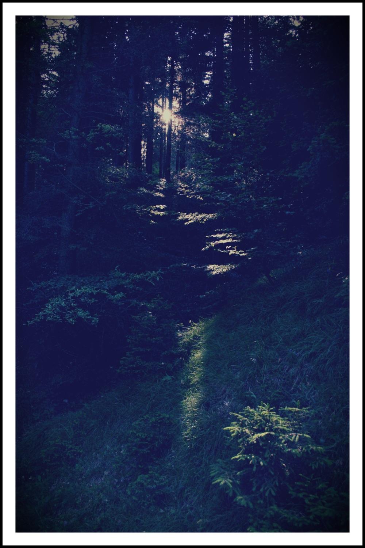 Un bosco trentino